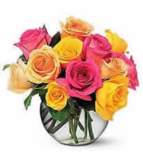 multi_roses