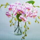 purple_white_orchid_cascading_bouquet